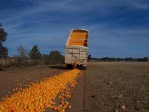Omkring en tredjedel av matressursene i både fattige og rike land kommer ikke til nytte.  Det er en stor global utfordring å få redusert svinn av mat, mener flere og flere politikere
